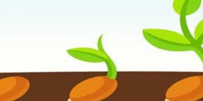 seed-1024x1024
